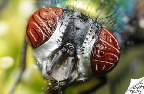 disease fly